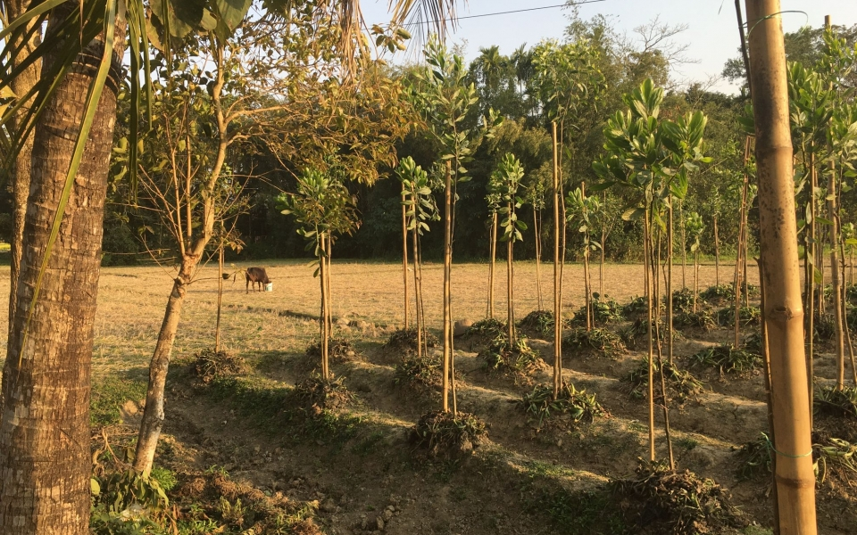 Fields near Kamal Bazar, Sylhet, Bangladesh, February 2020